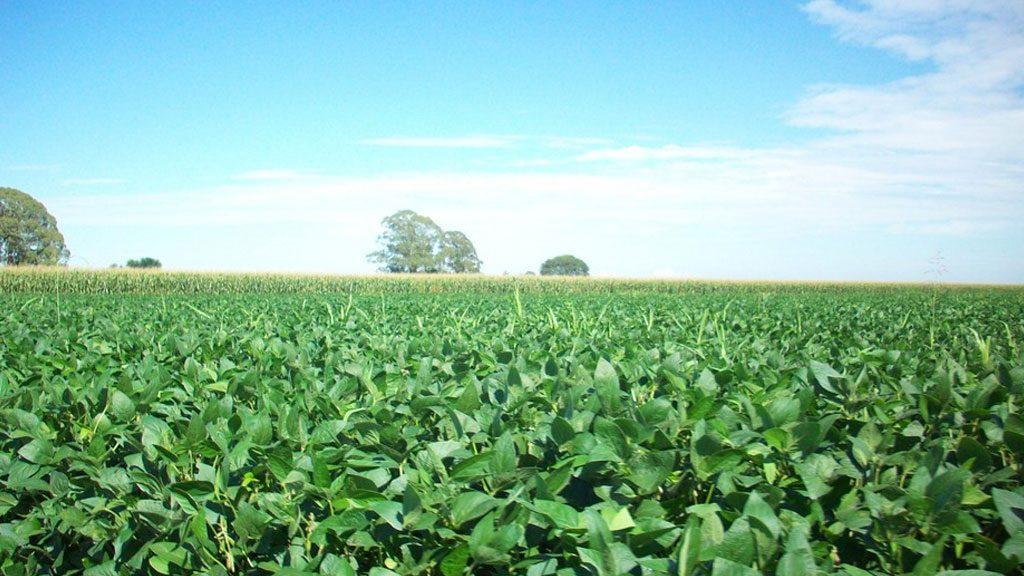 Convênios e homenagens comemoram o crescimento do agronegócio no Brasil
